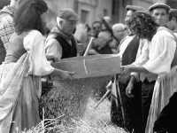 A Raddusa, piccolo centro agricolo dell'entroterra siciliano ogni anno a settembre si svolge la rivisitazione dell'antico rito della pisatura (spagliatura)  - Raddusa (6345 clic)