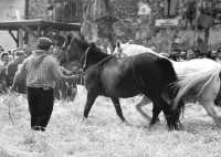 A Raddusa, piccolo centro agricolo dell'entroterra siciliano ogni anno a settembre si svolge la rivisitazione dell'antico rito della pisatura la spagliatura.  - Raddusa (7800 clic)