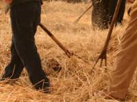 A Raddusa, piccolo centro agricolo dell'entroterra siciliano ogni anno a settembre si svolge la festa del Grano. Rivisitazione dell'antica pisatura la spagliatura per separare i preziosi chicchi di grano dalla paglia delle spighe.  - Raddusa (5905 clic)