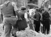 A Raddusa, piccolo centro agricolo dell'entroterra siciliano ogni anno a settembre si svolge la festa del Grano. Rivisitazione dell'antica pisatura la spagliatura per separare i preziosi chicchi di grano dalla paglia delle spighe.  - Raddusa (5732 clic)