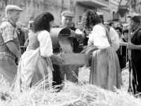 A Raddusa, piccolo centro agricolo dell'entroterra siciliano ogni anno a settembre si svolge la festa del Grano. Rivisitazione dell'antica pisatura la spagliatura per separare i preziosi chicchi di grano dalla paglia delle spighe.  - Raddusa (7412 clic)
