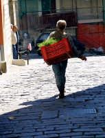 Il venditore di finocchietti  - Militello in val di catania (3356 clic)