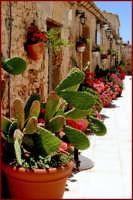 Particolare della chiesa nella piazzetta della vecchia tonnara  - Marzamemi (11076 clic)