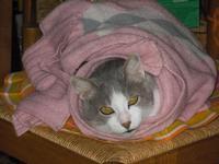 Gatto infreddolito   - Avola (4331 clic)