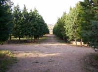 Catenanuova, Parco San Prospero c.da Censi.  - Catenanuova (2852 clic)