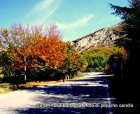 monti madonie Zona Piano Battaglia.    foto peppino carollo  - Petralia sottana (4729 clic)
