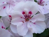 Macro su un fiore (549 clic)