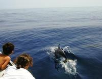 Delfini nel Golfo di Castellammare   - Castellammare del golfo (3365 clic)