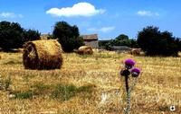 paesaggio rurale fra Modica e Pozzallo  POZZALLO Enzo Belluardo