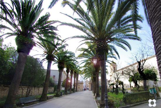 Ibla, un Viale della Villa Comunale - RAGUSA - inserita il 14-Mar-12