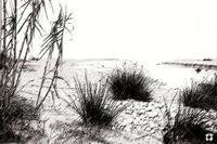 la foce    - Irminio (3728 clic)