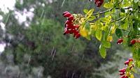 pioggia d'autunno   - Modica (5910 clic)