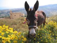 u sceccu   - Agrigento (5265 clic)