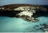 isola dei conogli  - Lampedusa (8662 clic)