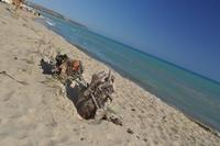 Spiaggia Eraclea Minoa - Foto Dino Vaccaro Spiaggia Eraclea Minoa  - Cattolica eraclea (5687 clic)