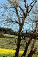 colori   - Castellana sicula (777 clic)