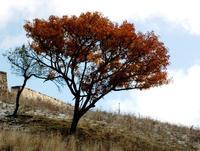 autunno   - Petralia soprana (1093 clic)