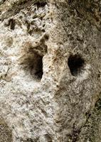 anello di pietra vi si legava il bestiame  - Petralia sottana (1589 clic)