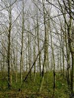 polloni bosco di castagno in veste autunnale  - Petralia sottana (2094 clic)