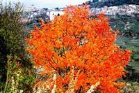 autunno   - Petralia sottana (2122 clic)