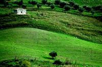 campagna madonita   - Castellana sicula (6851 clic)