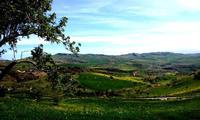 primavera   - Petralia sottana (743 clic)