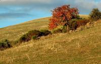 autunno   - Petralia soprana (1261 clic)