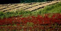 colori   - Petralia sottana (542 clic)