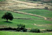 campagna   - Petralia sottana (770 clic)
