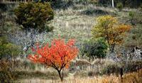 autunno   - Petralia soprana (793 clic)