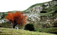 autunno   - Petralia soprana (878 clic)