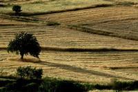 campagna madonita   - Petralia sottana (600 clic)