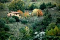 autunno   - Petralia sottana (753 clic)