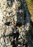 faccia di....pietra   - Petralia soprana (1249 clic)