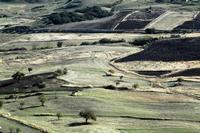 campi agrari   - Petralia soprana (1156 clic)