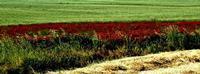 colori   - Castellana sicula (1260 clic)