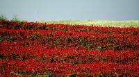 colori   - Castellana sicula (1144 clic)