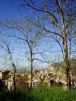 panorama   - Petralia sottana (559 clic)