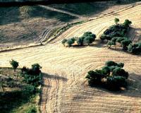 campi agrari   - Gangi (1816 clic)