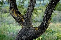tronco di albero   - Scillato (1476 clic)