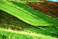 primavera   - Caltavuturo (523 clic)