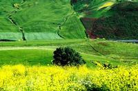 colori   - Castellana sicula (7566 clic)