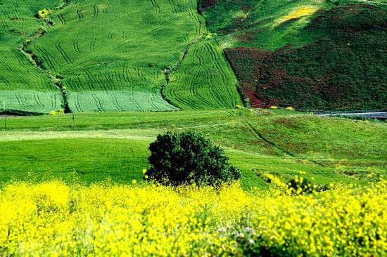 colori - Castellana Sicula - inserita il 09-May-16