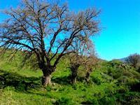 alberi   - Blufi (842 clic)