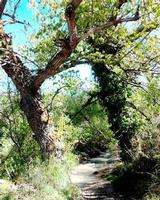 alberi   - Blufi (875 clic)