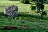 casa rurale   - Gangi (1439 clic)