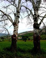 località Madonna dll'olio   - Blufi (877 clic)