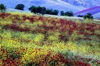 colori   - Petralia sottana (16164 clic)