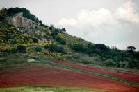 campo fiorito   - Castellana sicula (1098 clic)