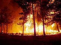 l'incendio boschivo   - Polizzi generosa (1724 clic)